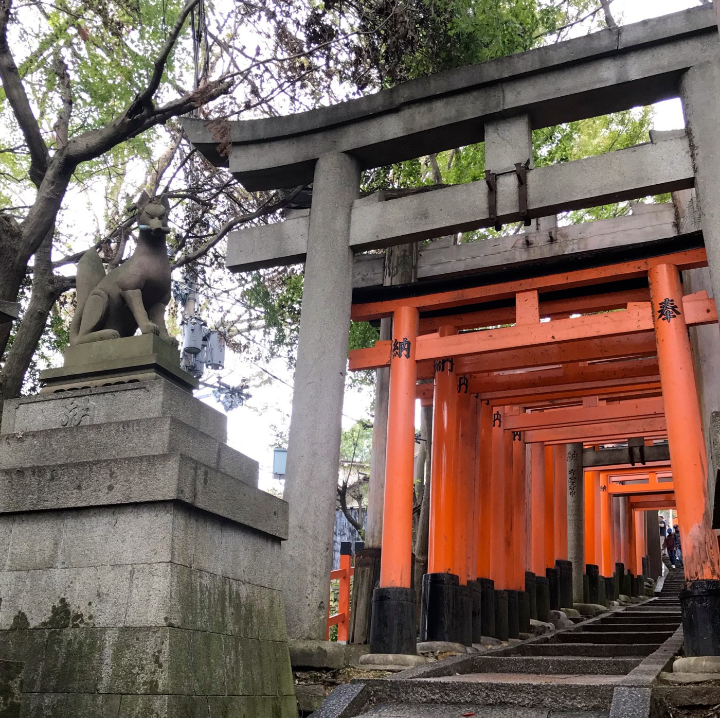 Inari fox statue guarding the entrance to stairs beneath many closely-packed vermilion torii gates at Fushimi Grand Shrine