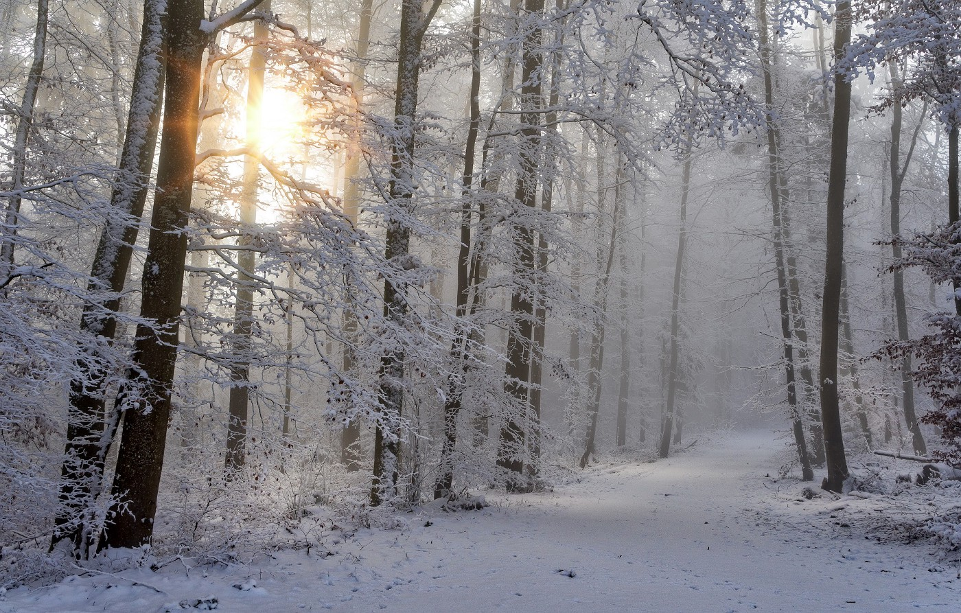 Snow in woods with sun shining