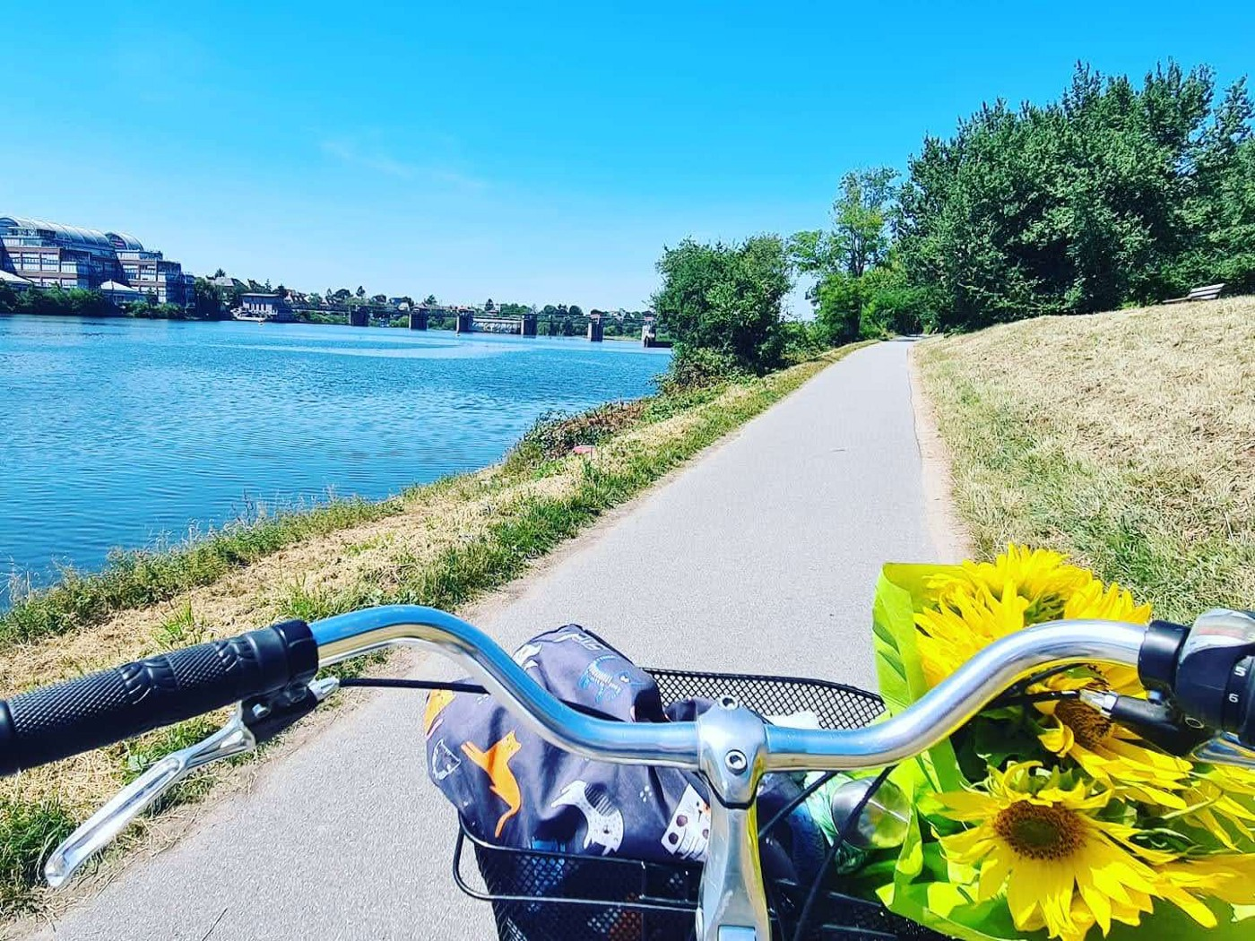 Cycling in Heidelberg—cycling—sustainable cities