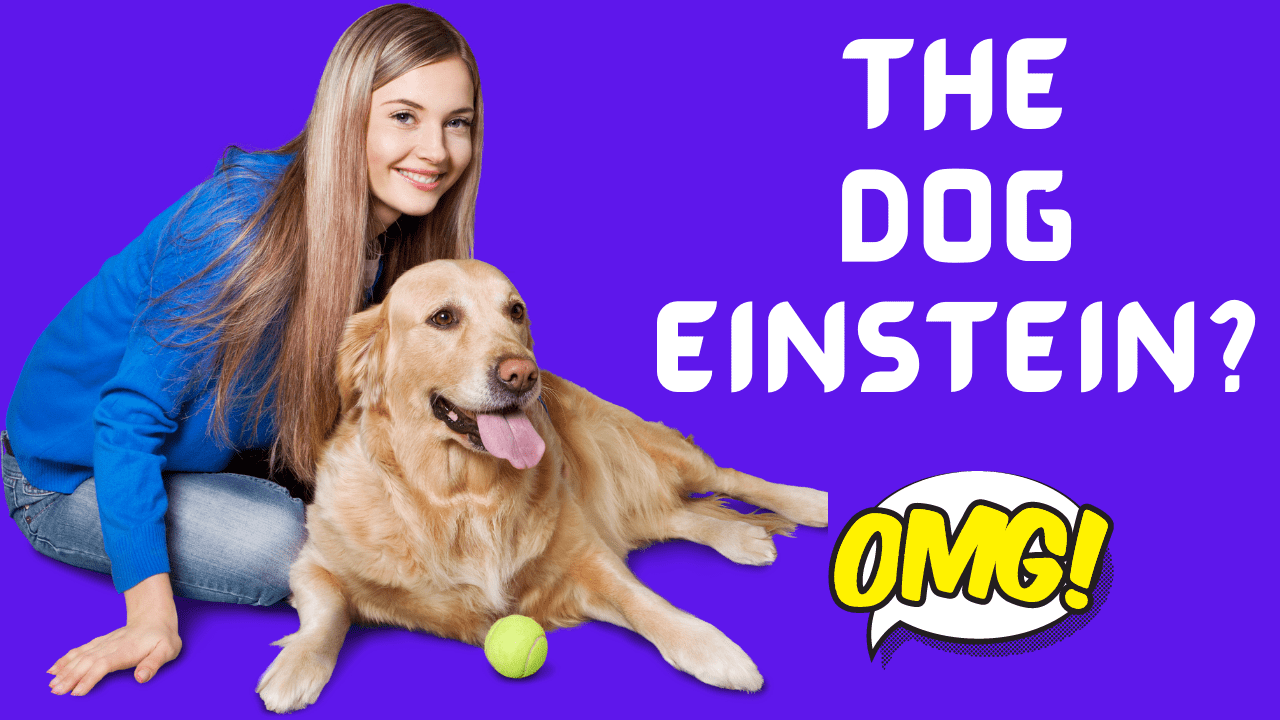 Brain training for dogs review.