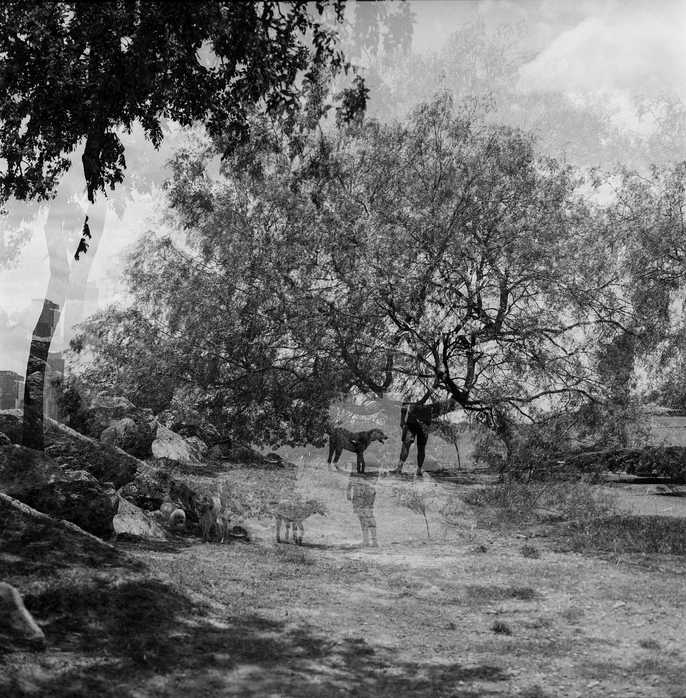 A double exposure image of the silhouette of a person with a dog, surrounded by trees, made with a Kodak Brownie camera.