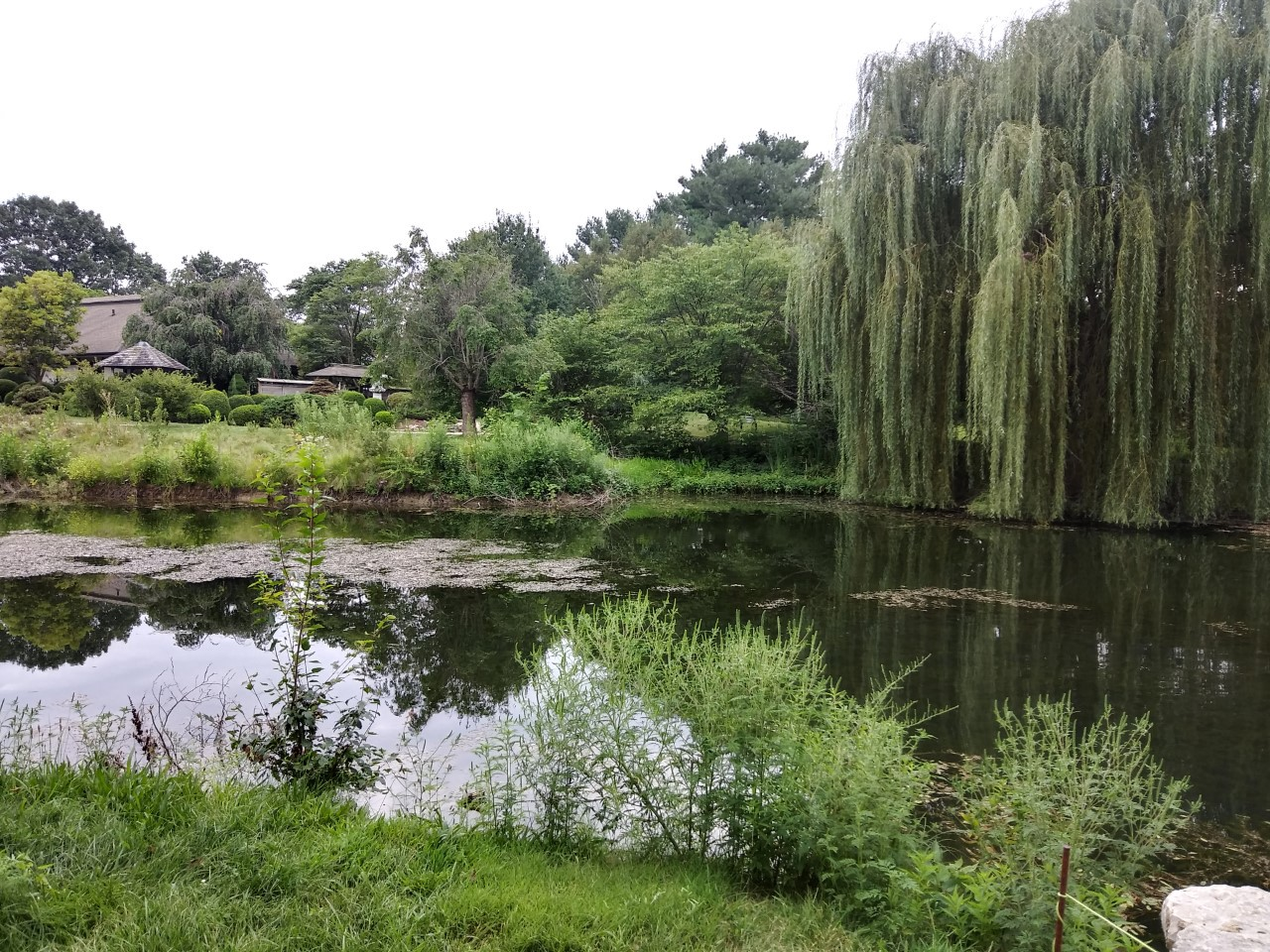 A pond surrounded by several trees including a weeping willow in a Japanese garden with Japanese-style house in background.