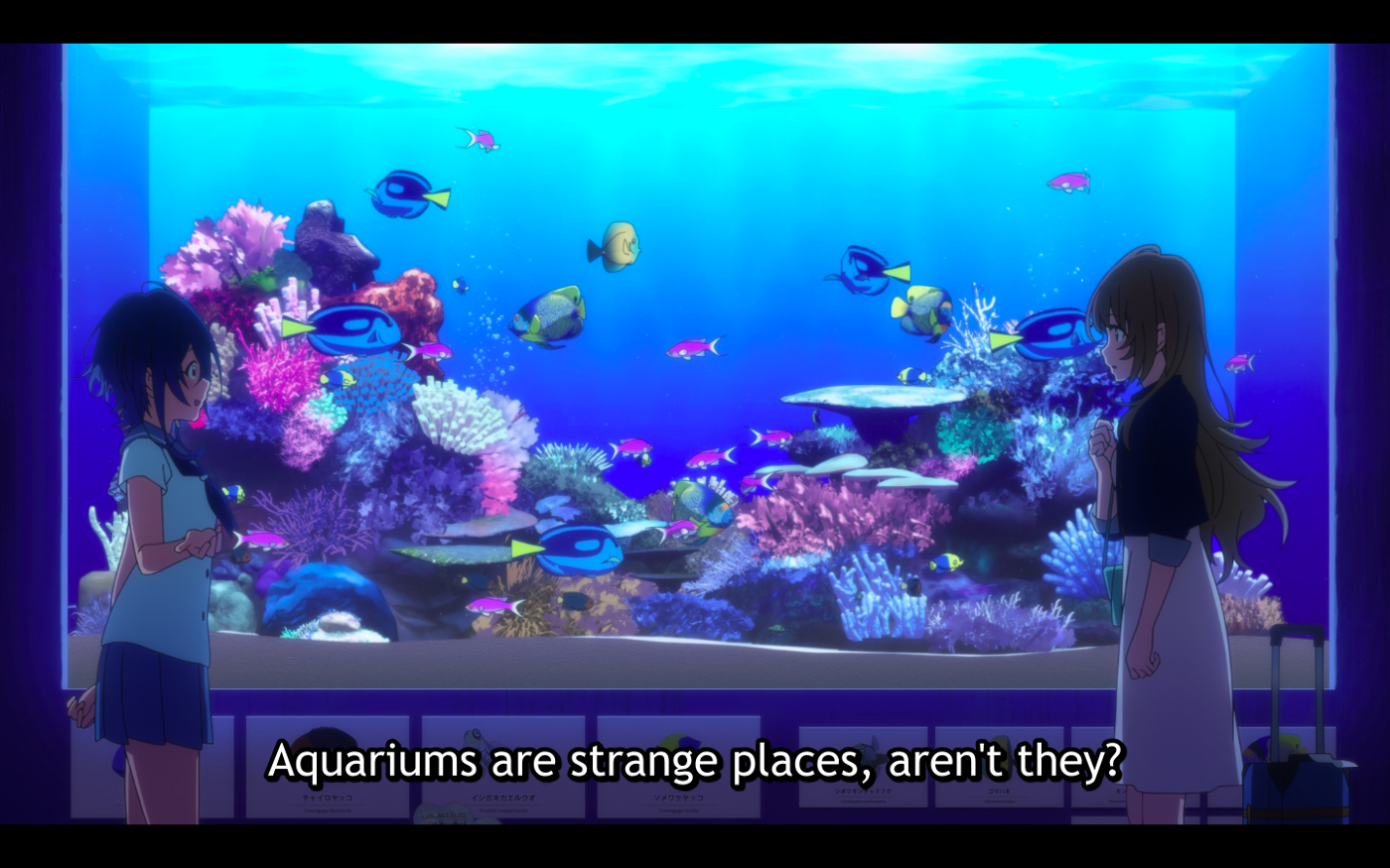 Kukuru and Fuuka meeting for the first time in front of a fish tank showing distance.