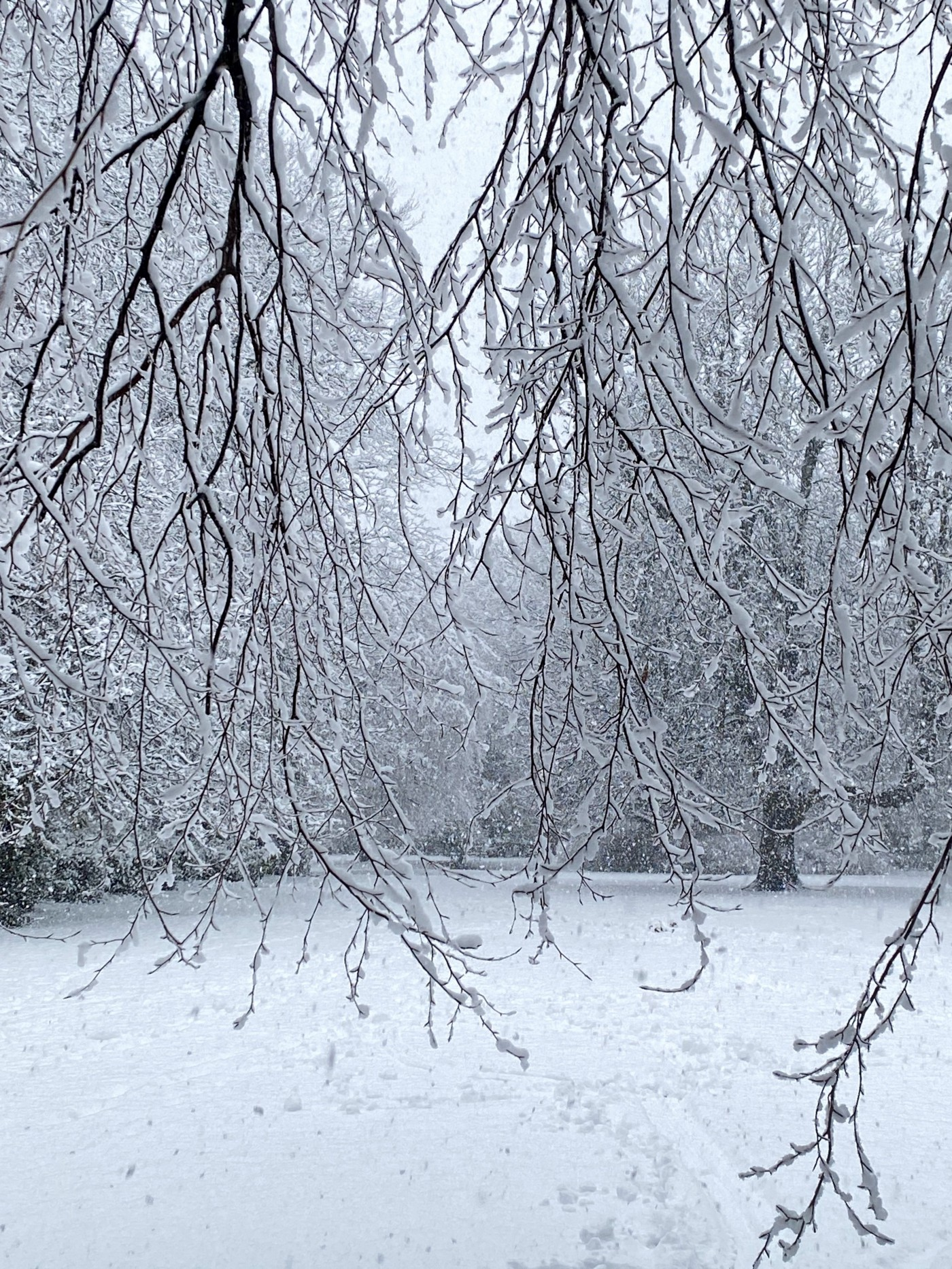 Snow covered branches in front of snowy parkland scene