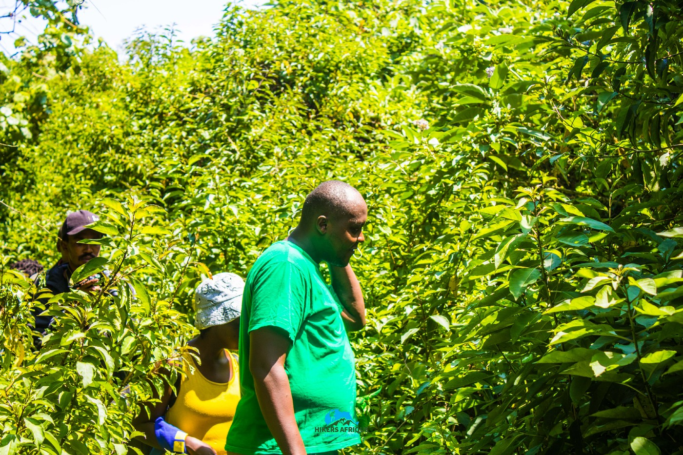 Cliff Njuguna and other hikers looking waiting for wild strawberries along the Gatamaiyu trail