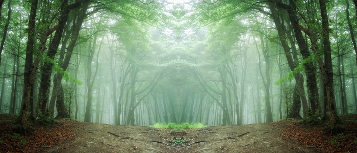 image of a dirt path in a forest