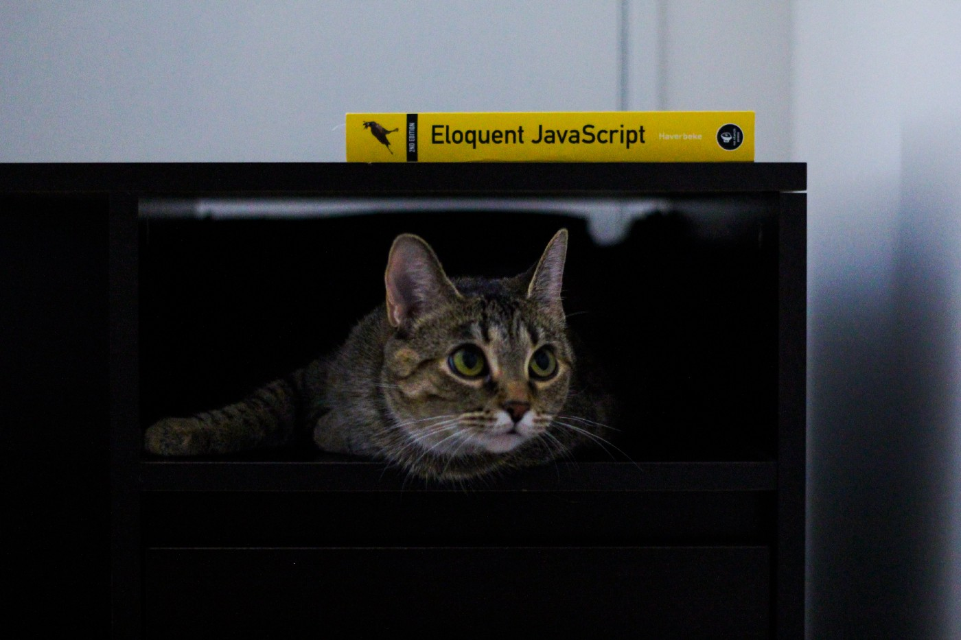 "The book ""Eloquent JavaScript"" on top of a screen showing a cat"