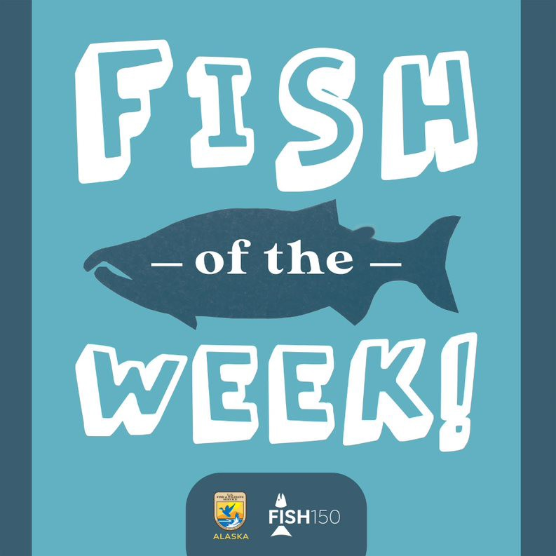 """logo showing """"fish of the week"""" with a fish in the middle with blue and white colors"""