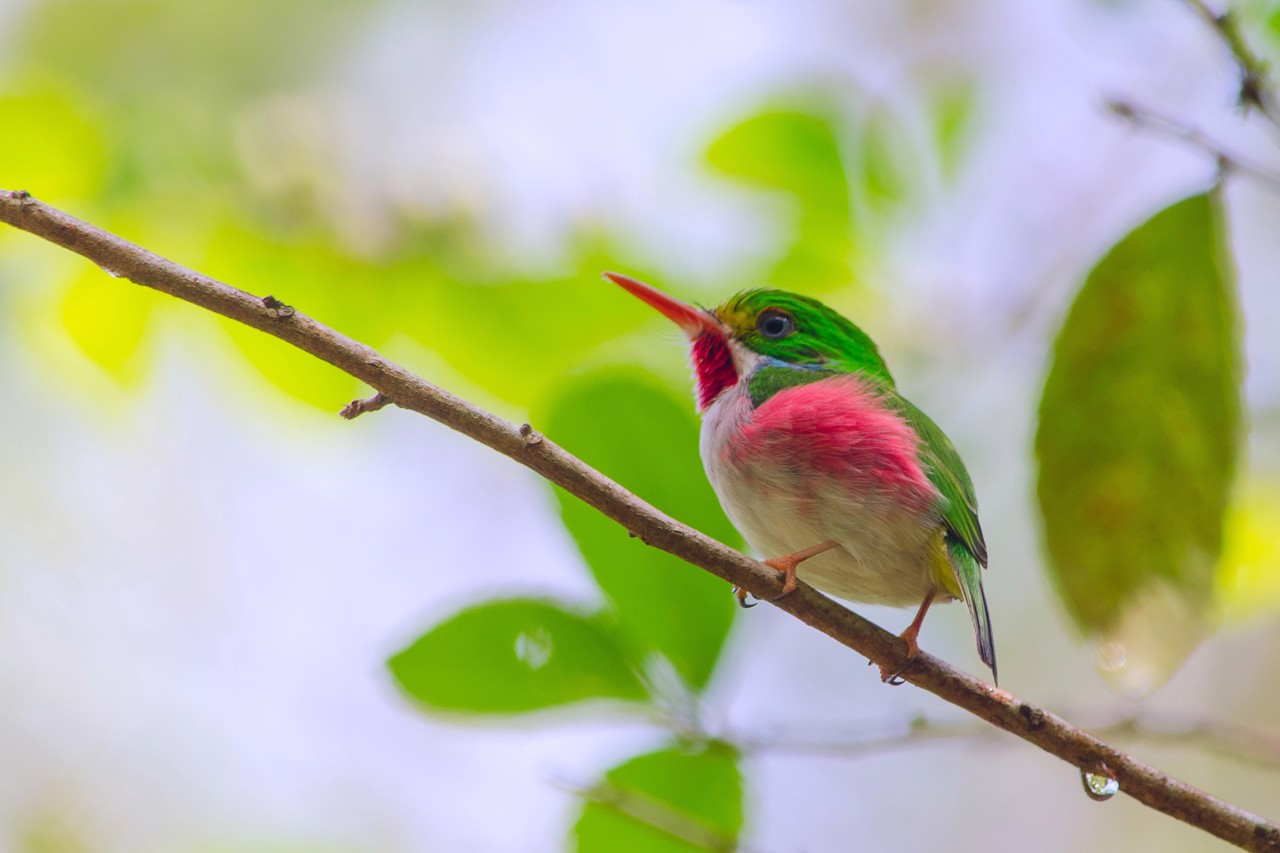 Green, pink, and white bird with a red beak on a branch