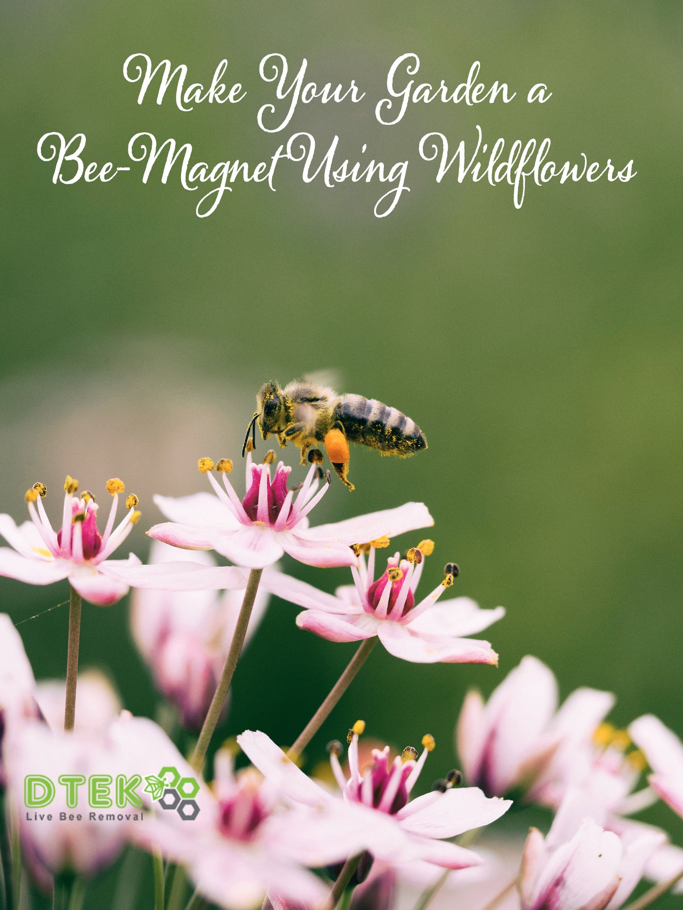 Make Your Garden a Bee-Magnet Using Wildflowers
