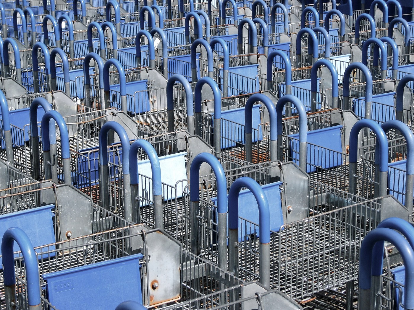 Hundreds of shopping carts lined up organized, blue plastic covering gray metal. A consumer's heaven.