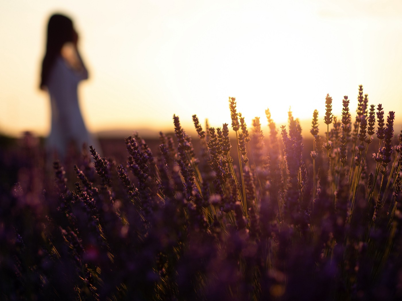 Woman at dawn in a wheat field with the sun coming up