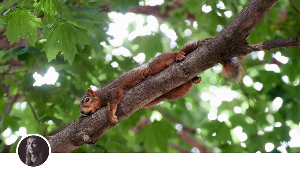 Image of a squirrel lounging on a tree branch