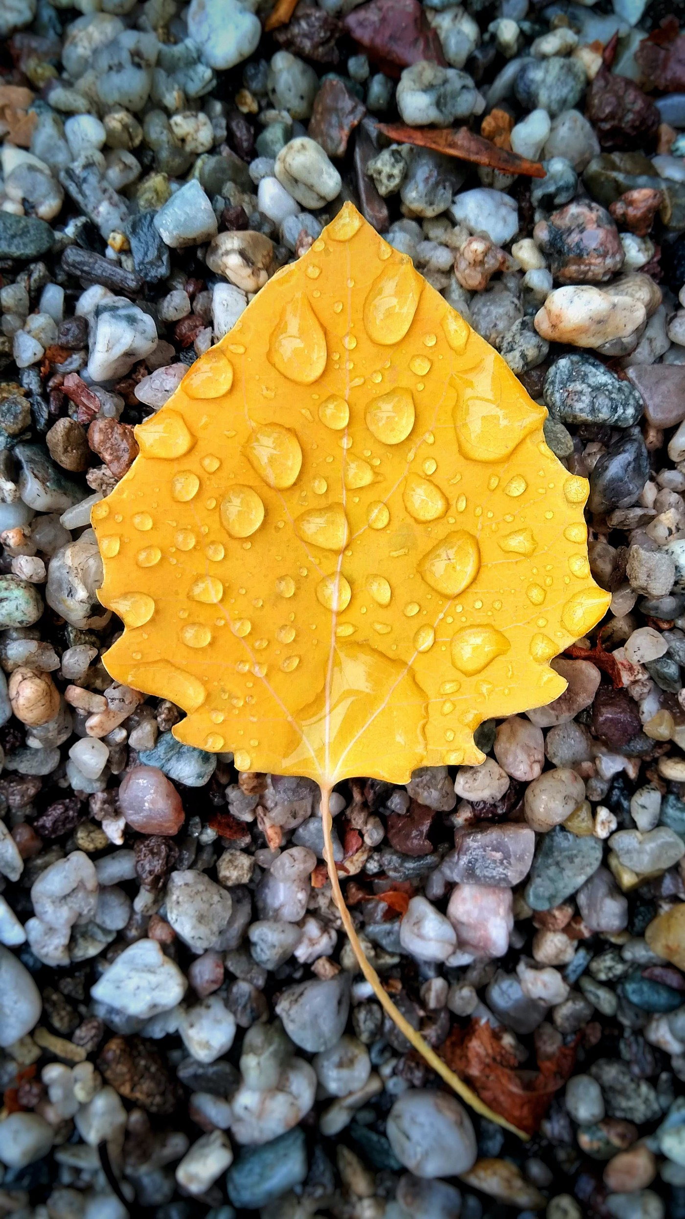 Bright yellow leaf with water droplets resting on small, pastel-colored wet rocks.