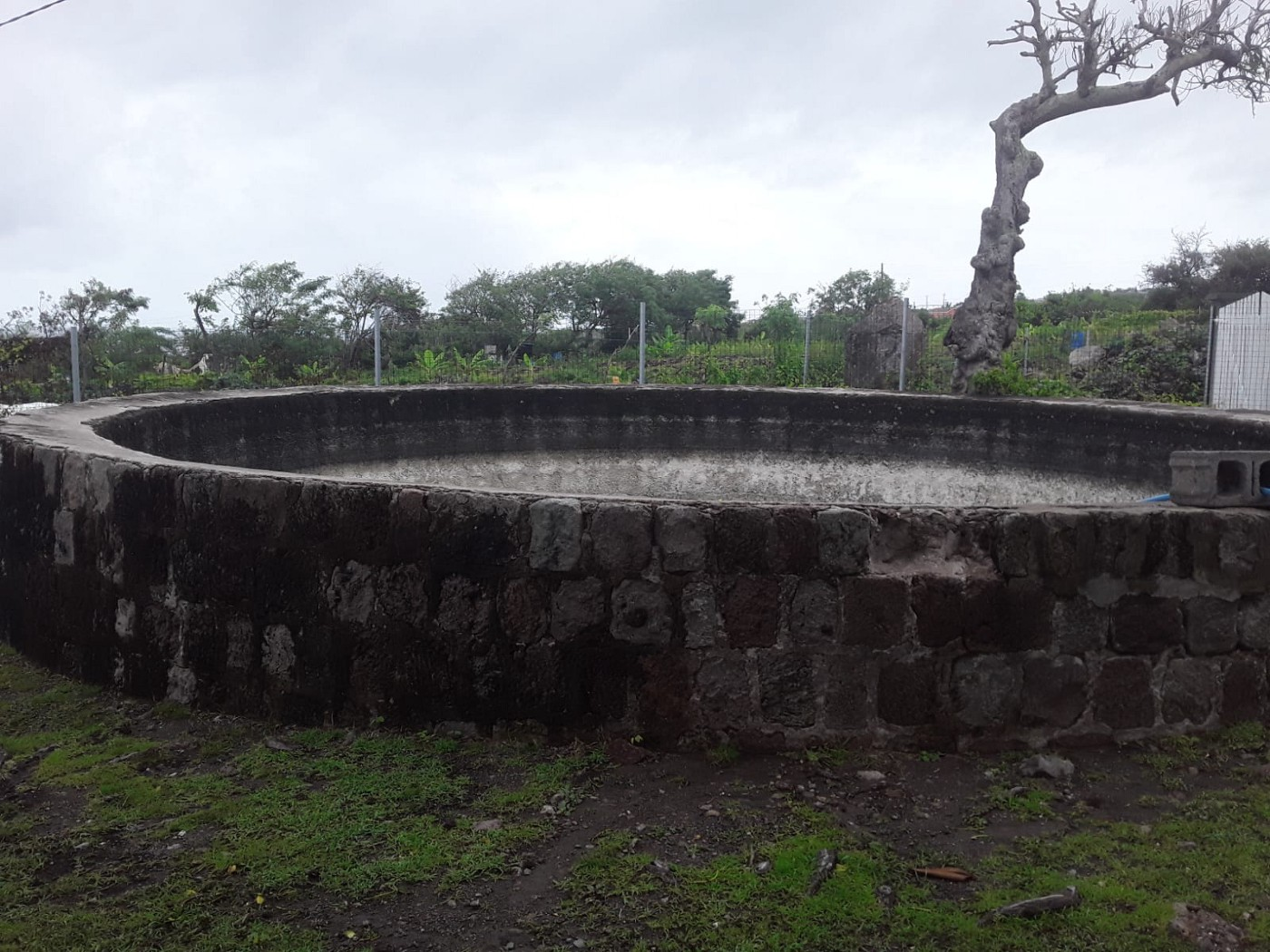 image of an old stone cistern that was used to store water in sugar plantations during slavery. In the background are the fields that once grew cane but is now pasture.
