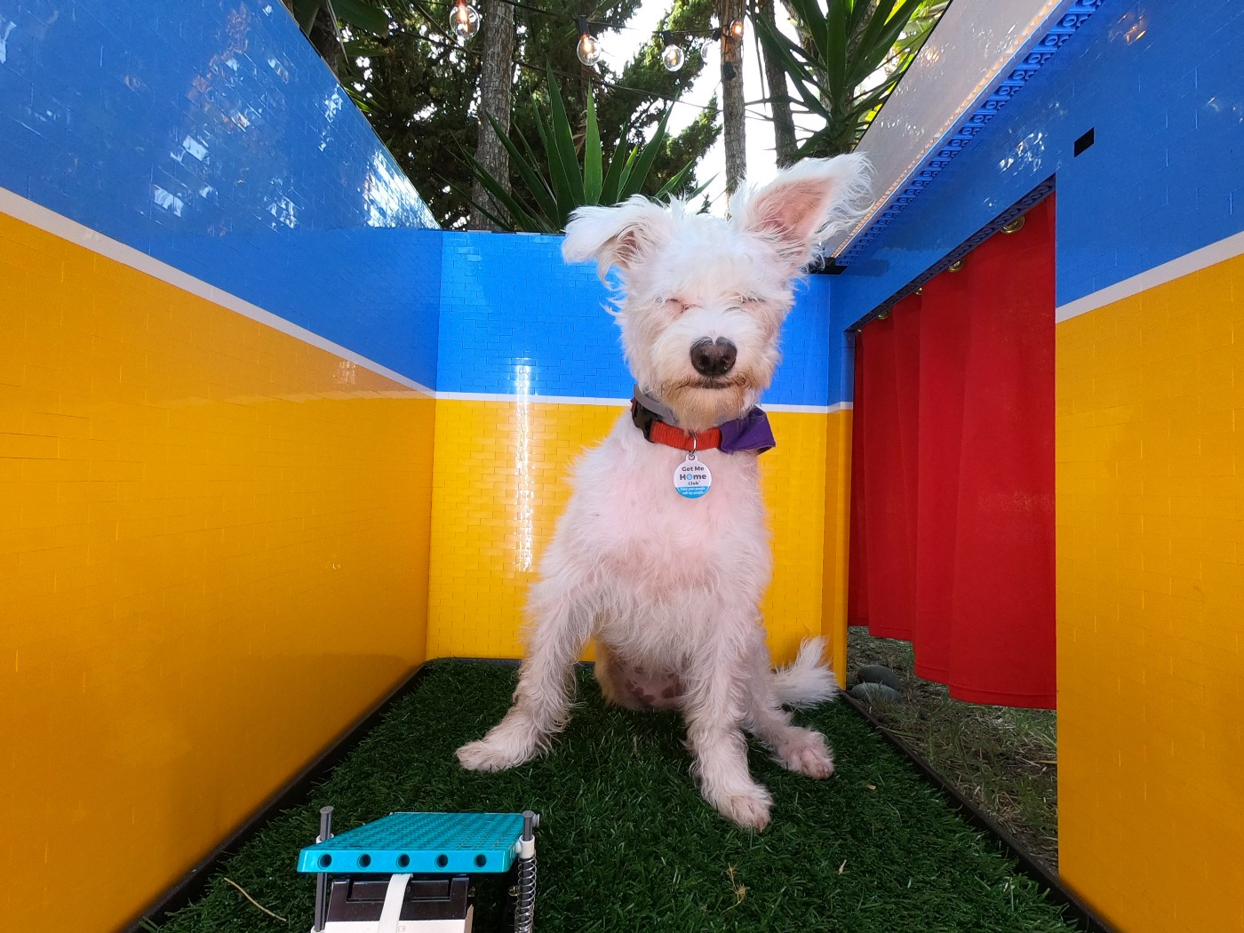 "A cute squinting white dog sits near a foot pedal inside a colorful ""photo booth"" with an open air top and trees behind them"