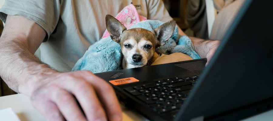 Small dog in lap as man works on laptop