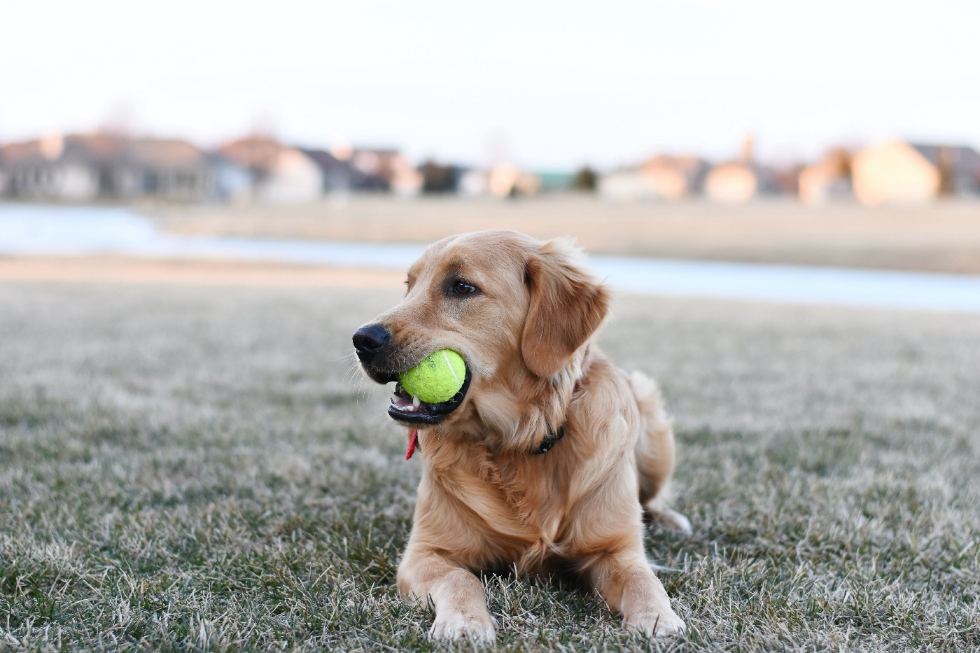 Fetch Photo by Julissa Helmuth from Pexels
