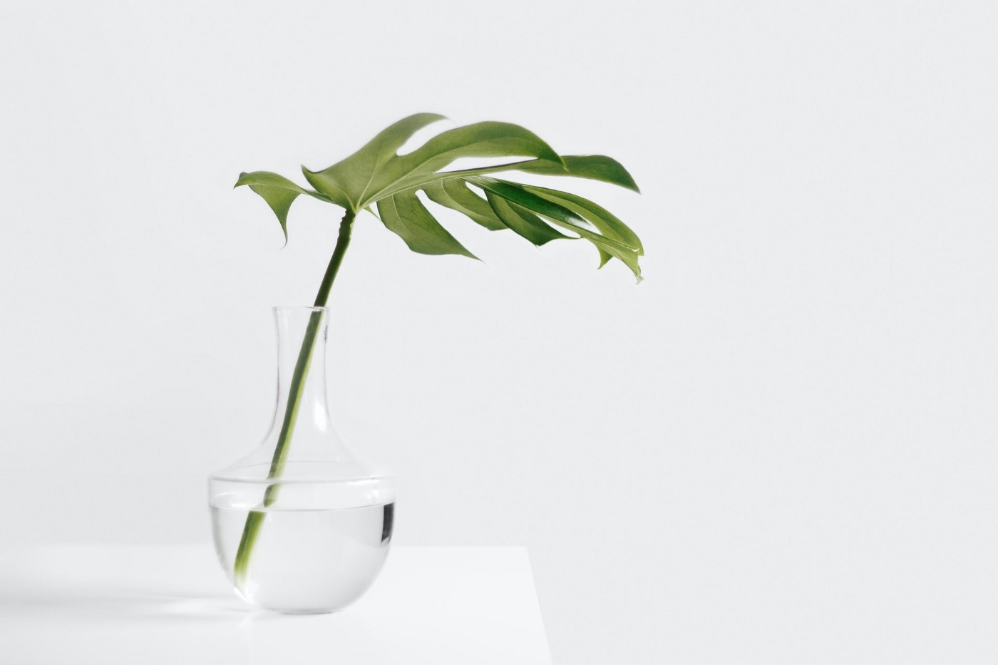 A plant in a glass vase filed with water