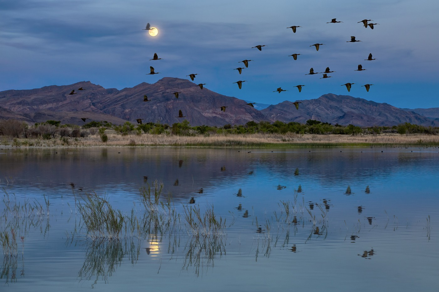 waterfowl in the air over water in the evening