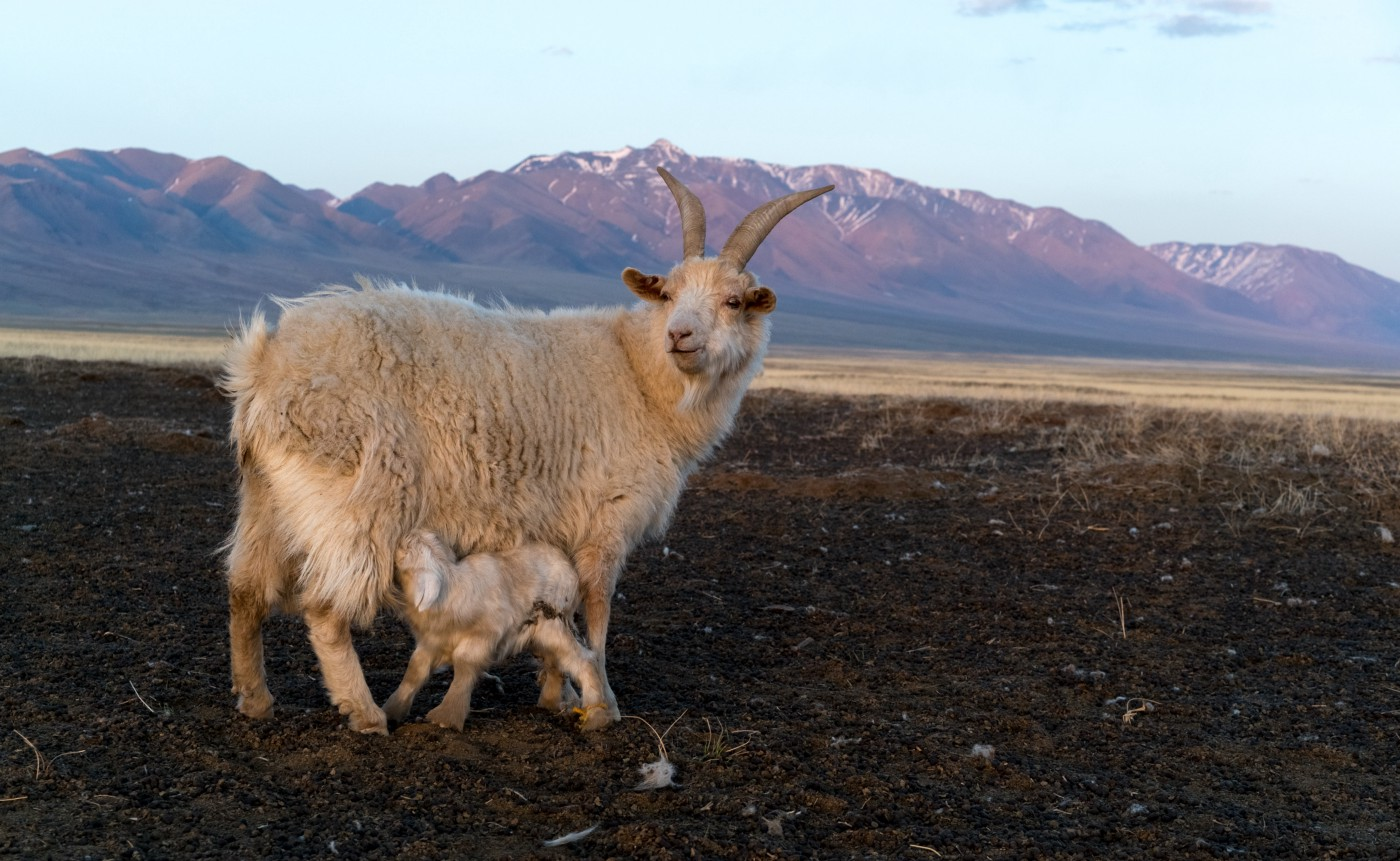 b71be693 Thus, many herders have doubled or tripled the size of their flock, putting  enormous environmental pressure on grasslands already suffering  increasingly ...