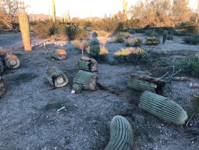 Organ Pipe Cactus National Monument Photo from @LaikenJordahl on Twitter