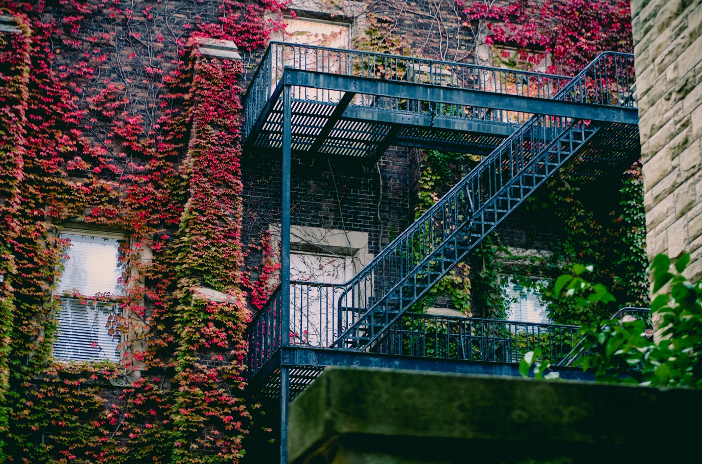 Apartment building with vines growing all over it.