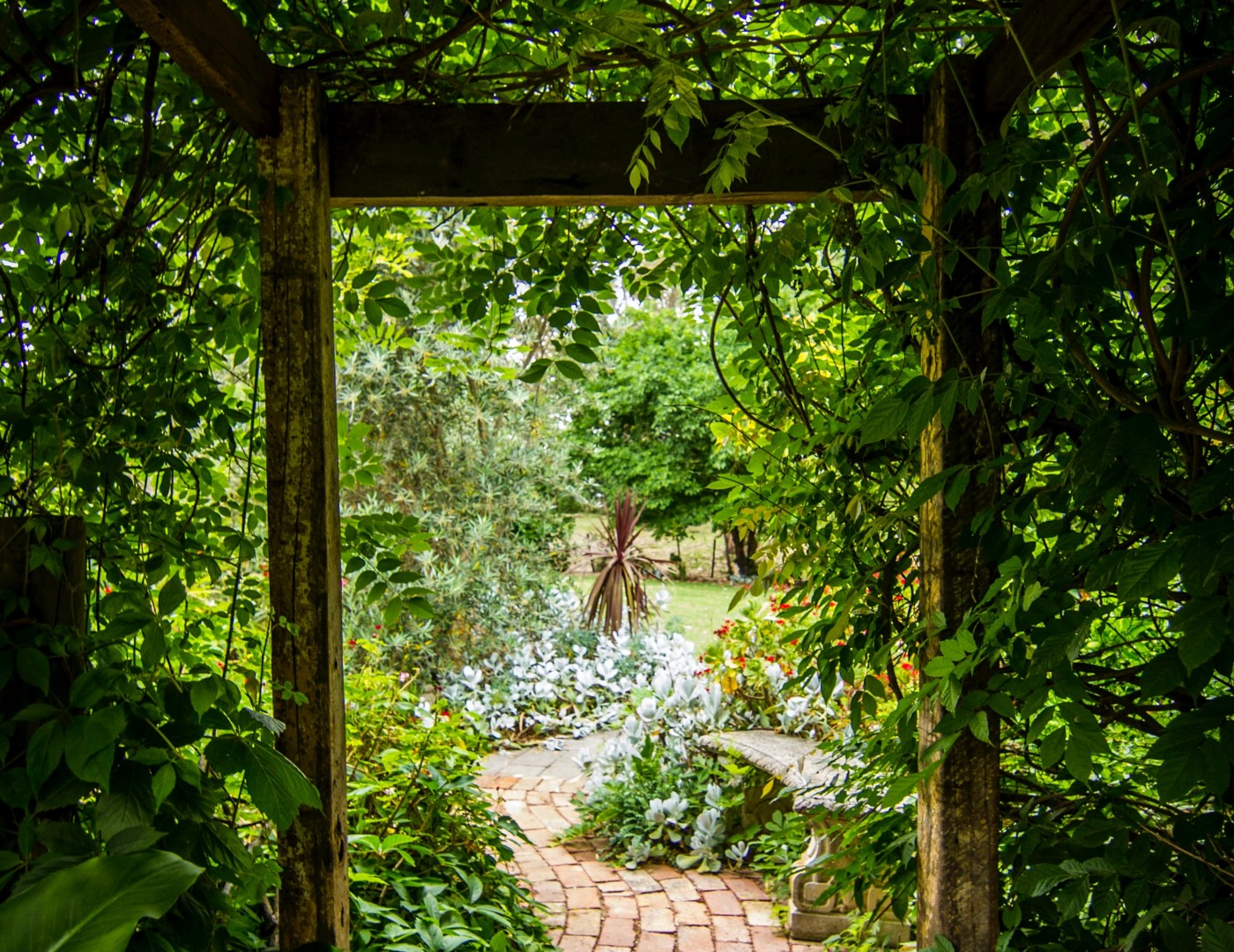 Garden path with green plants