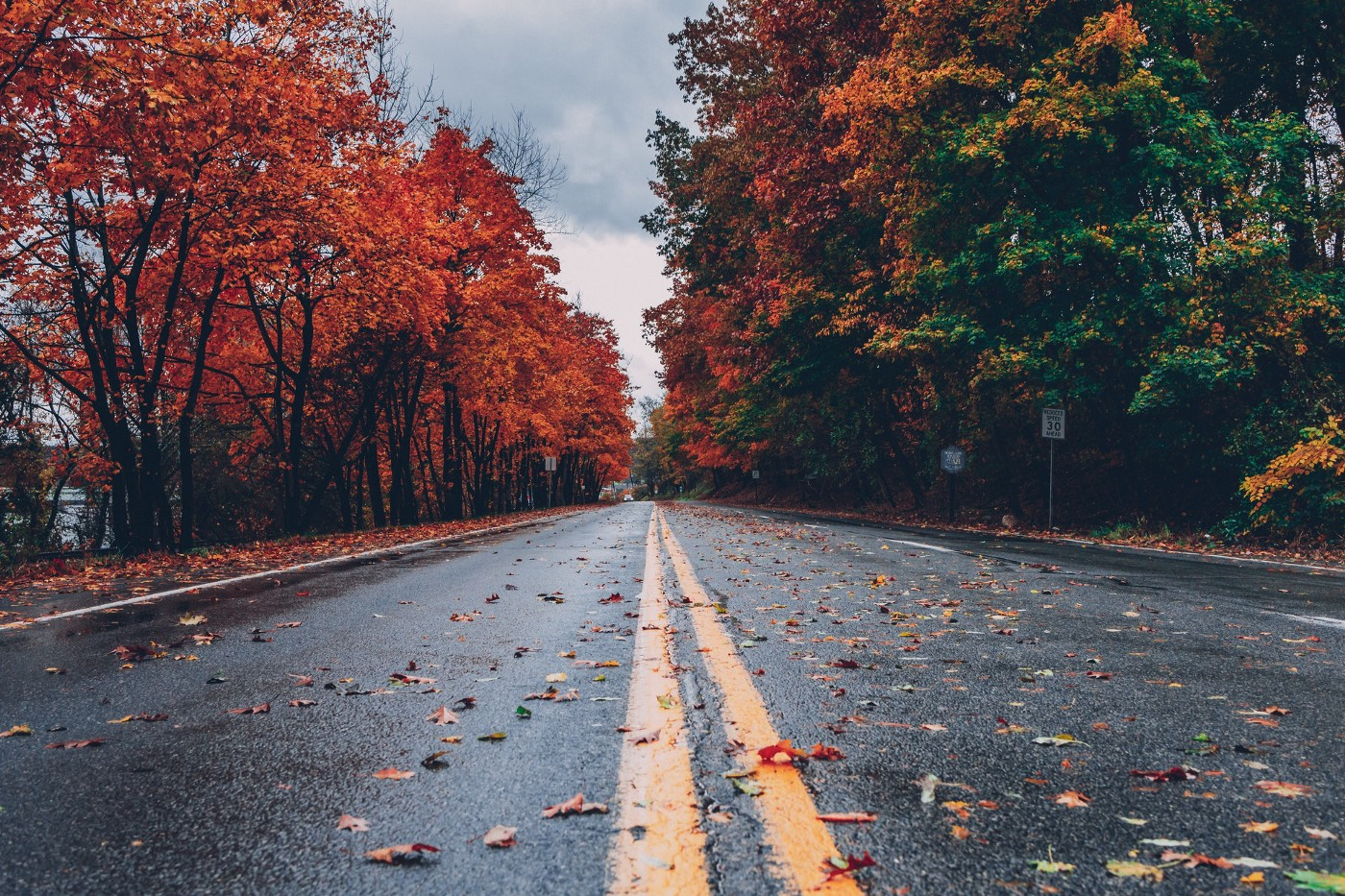 Concrete road between trees with fall leaves scattered.