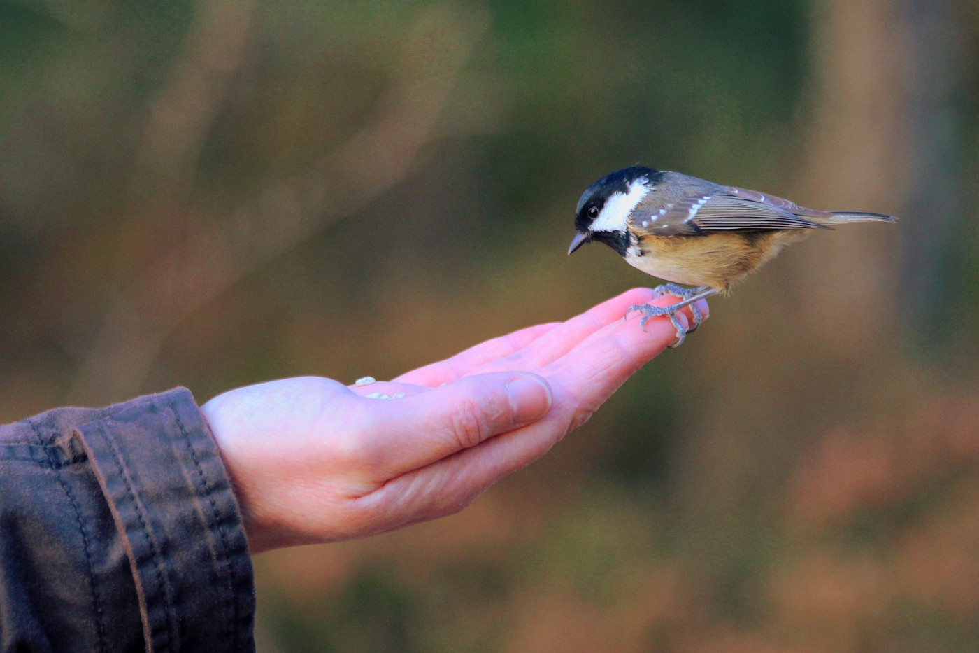 Hand with a bird perched on the fingertips