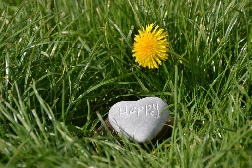A yellow dandelion in green grass with a rock that says Happy