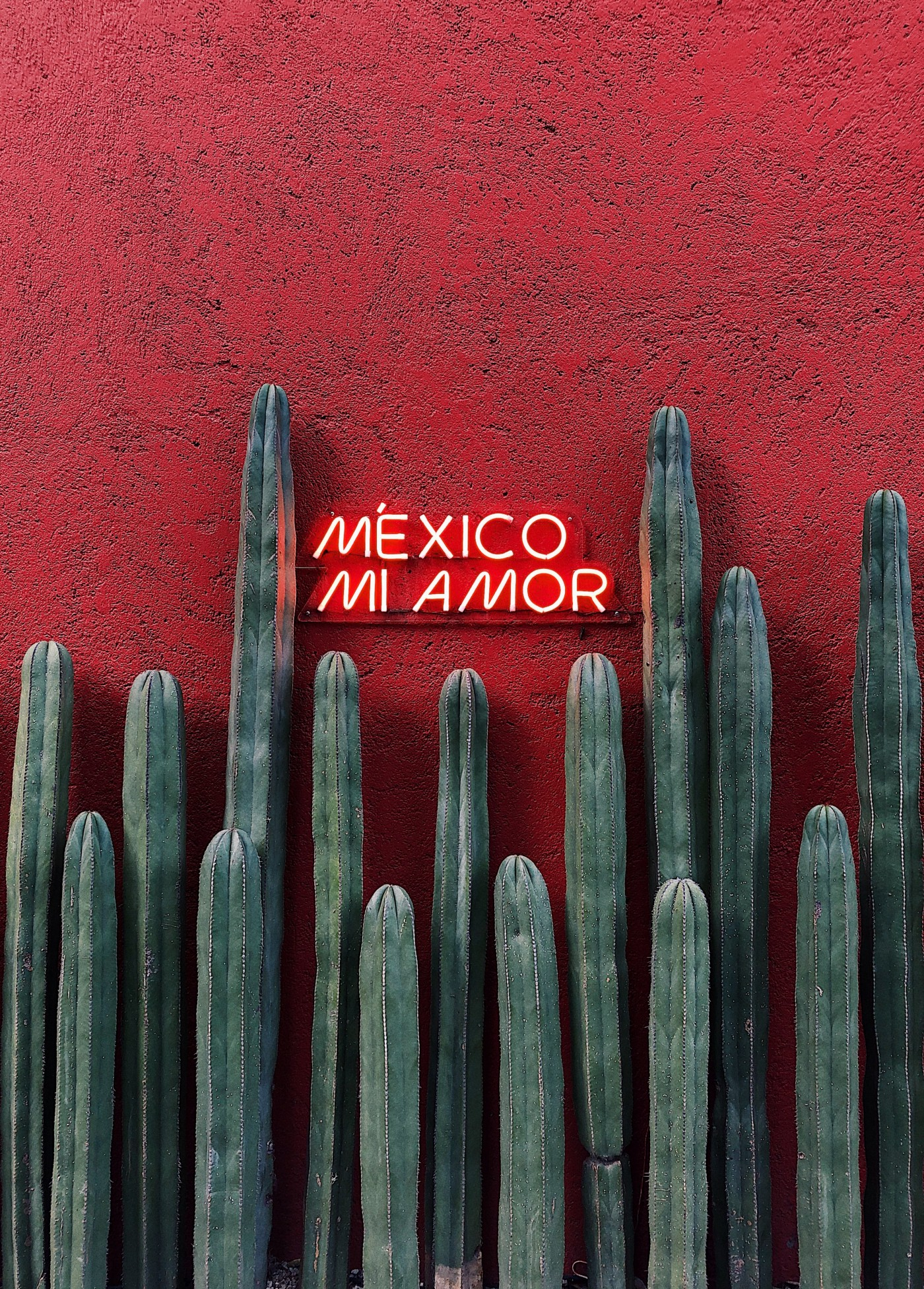 """Photo of cacti in front of a red wall, with neon lettering reading """"México mi amor."""""""