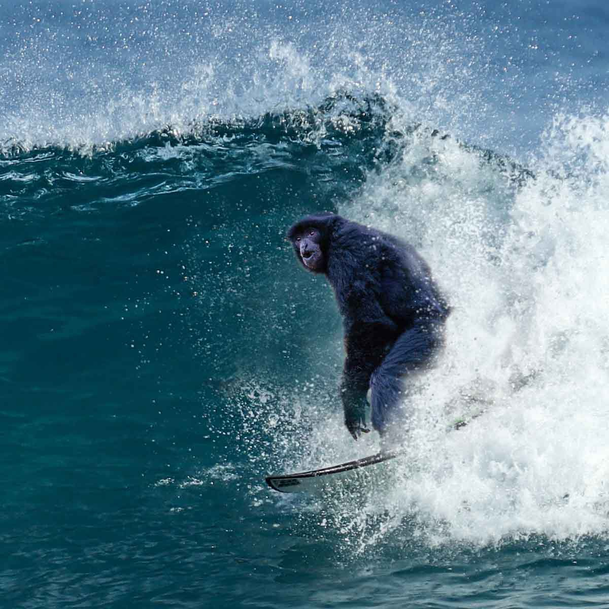 A surfing monkey