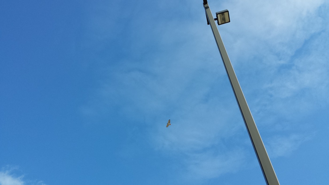 Photo of blue sky, light post and one bird circling.