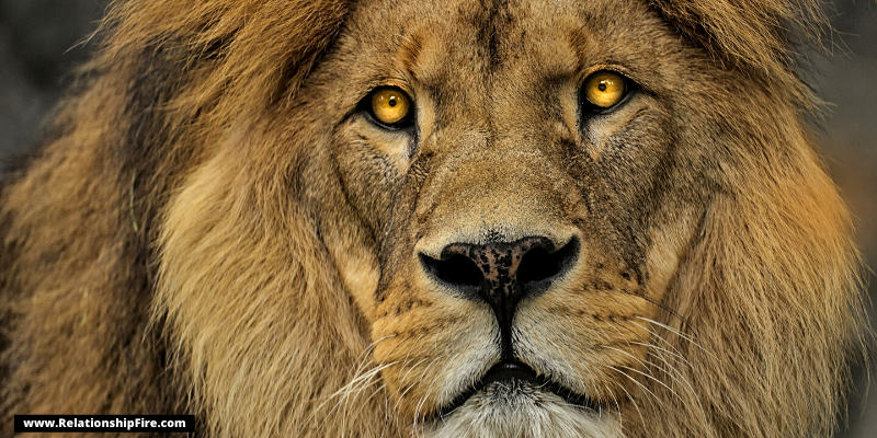 Close up of a lion—These 4 Animals Enjoy Oral Sex—Here's What We Can Learn