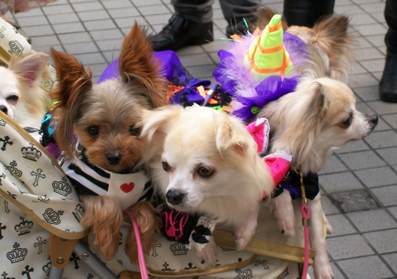 Halloween costume party dogs