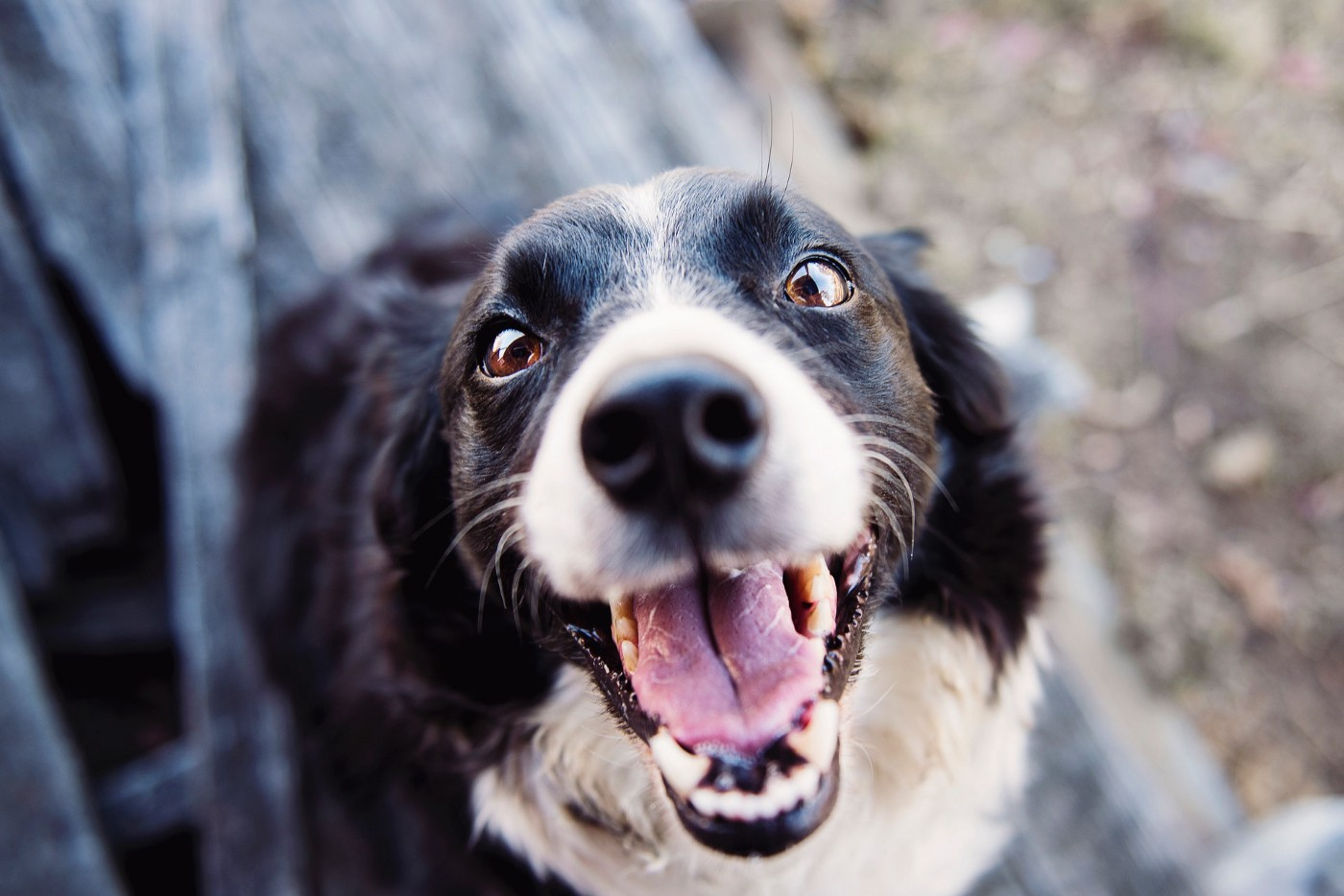 Your Savvy Dog Can Easily Teach You How to Live a Happy Life