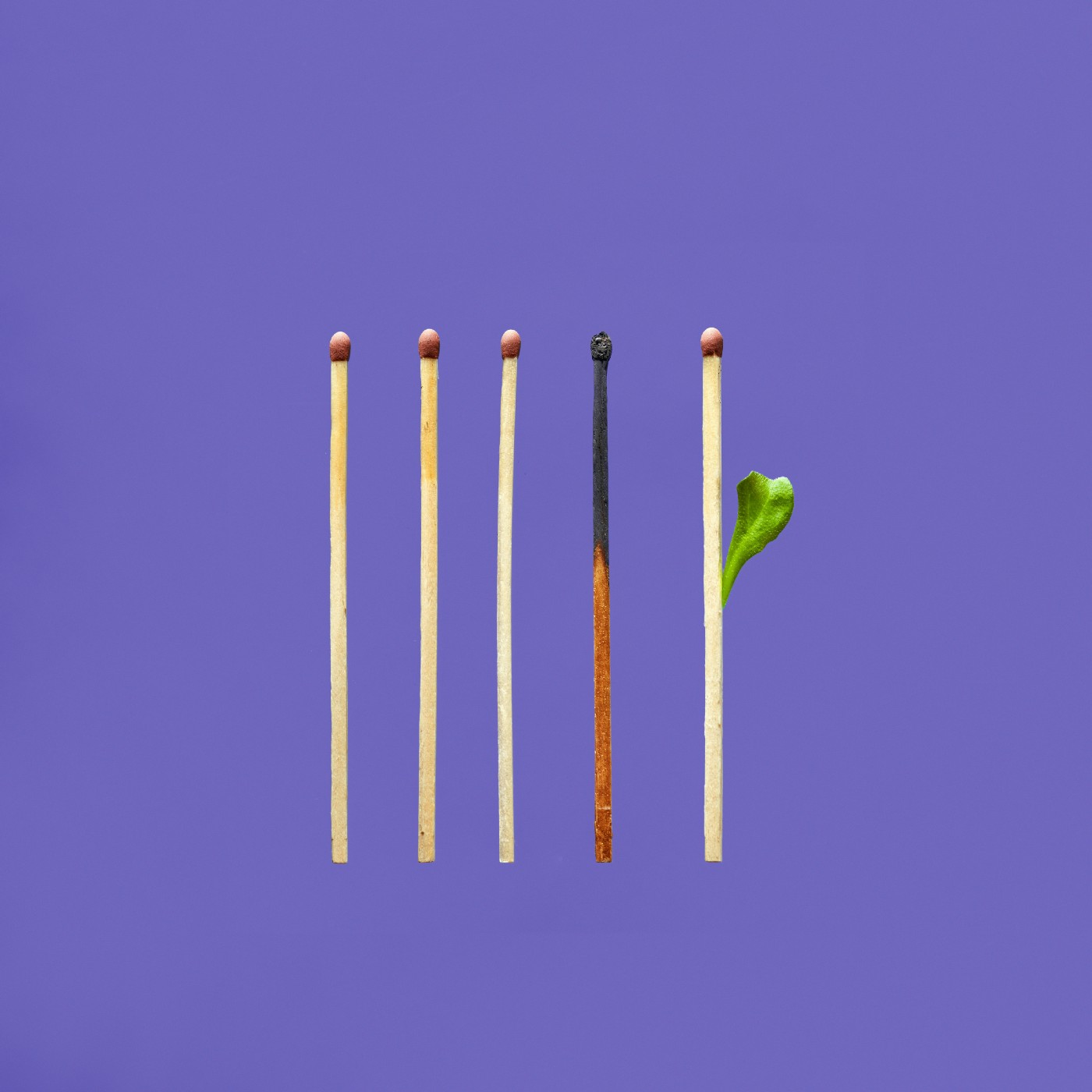Some unlit matches and a burnt one. A new match with a leaf sprouting out of it.