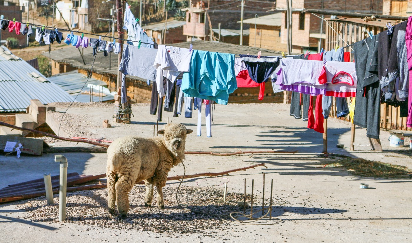a furry animal standing near laundry