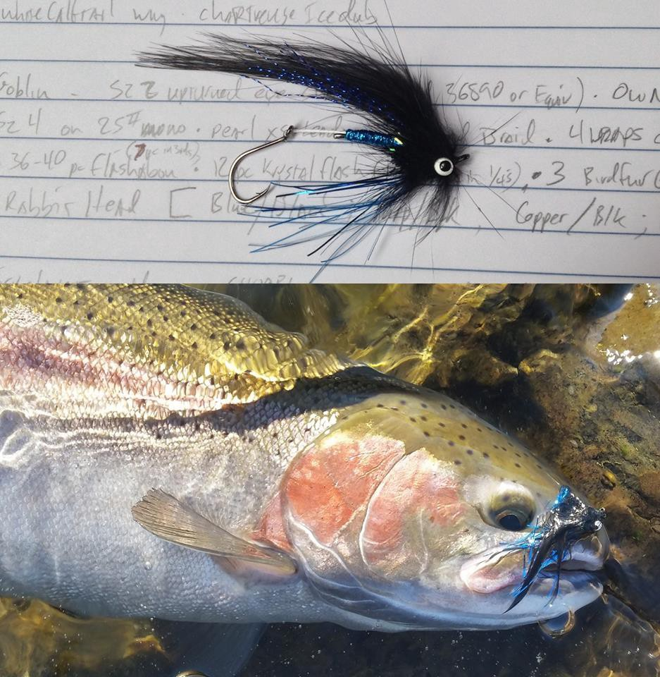 a steelhead trout with a lure
