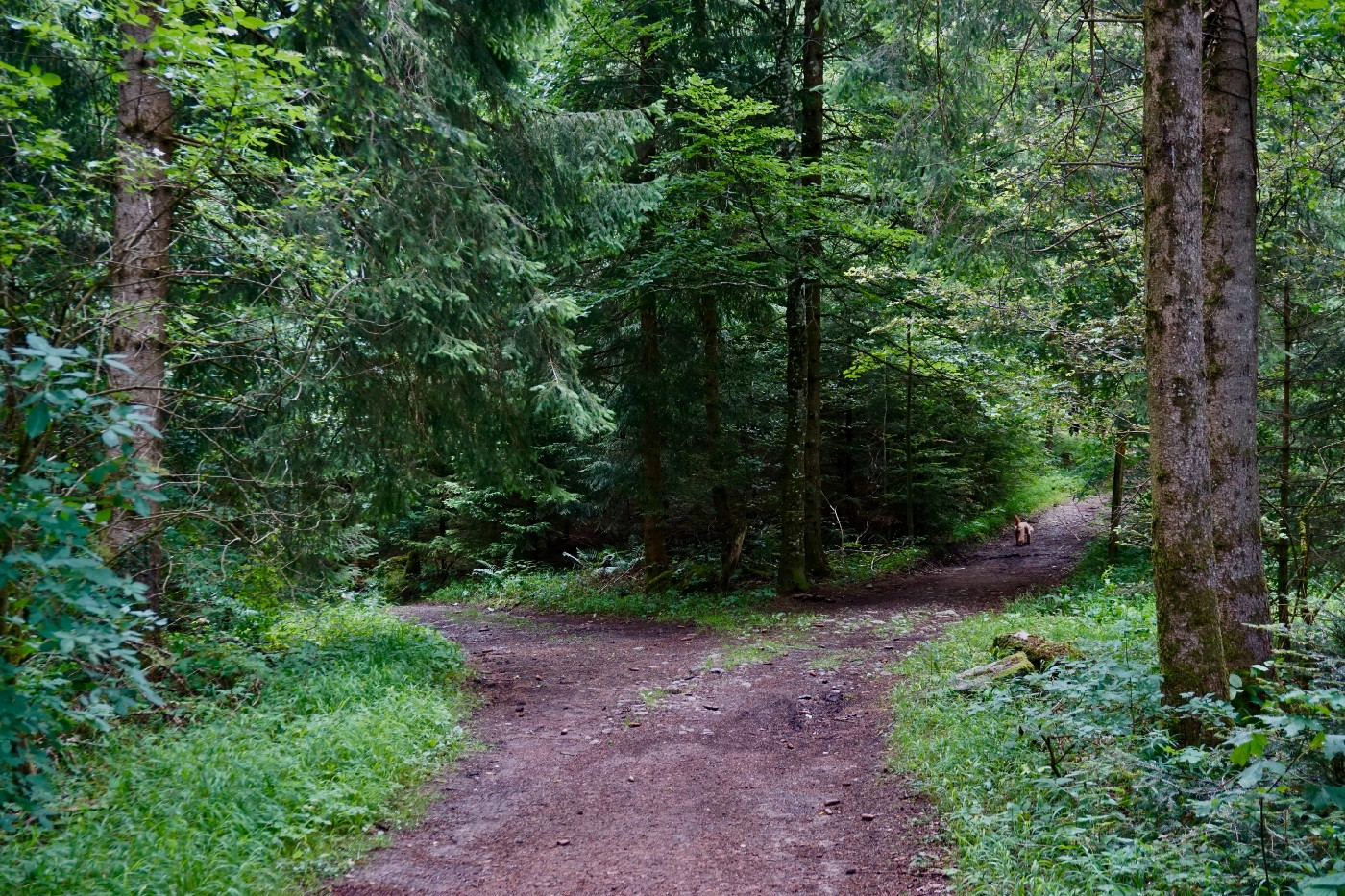 Two paths in the woods