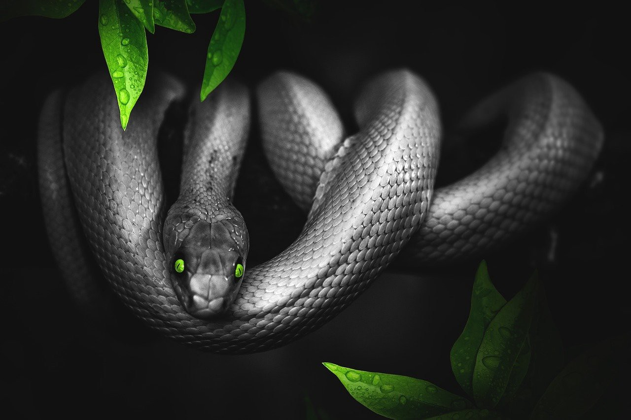 Black snake with green eyes in tree.