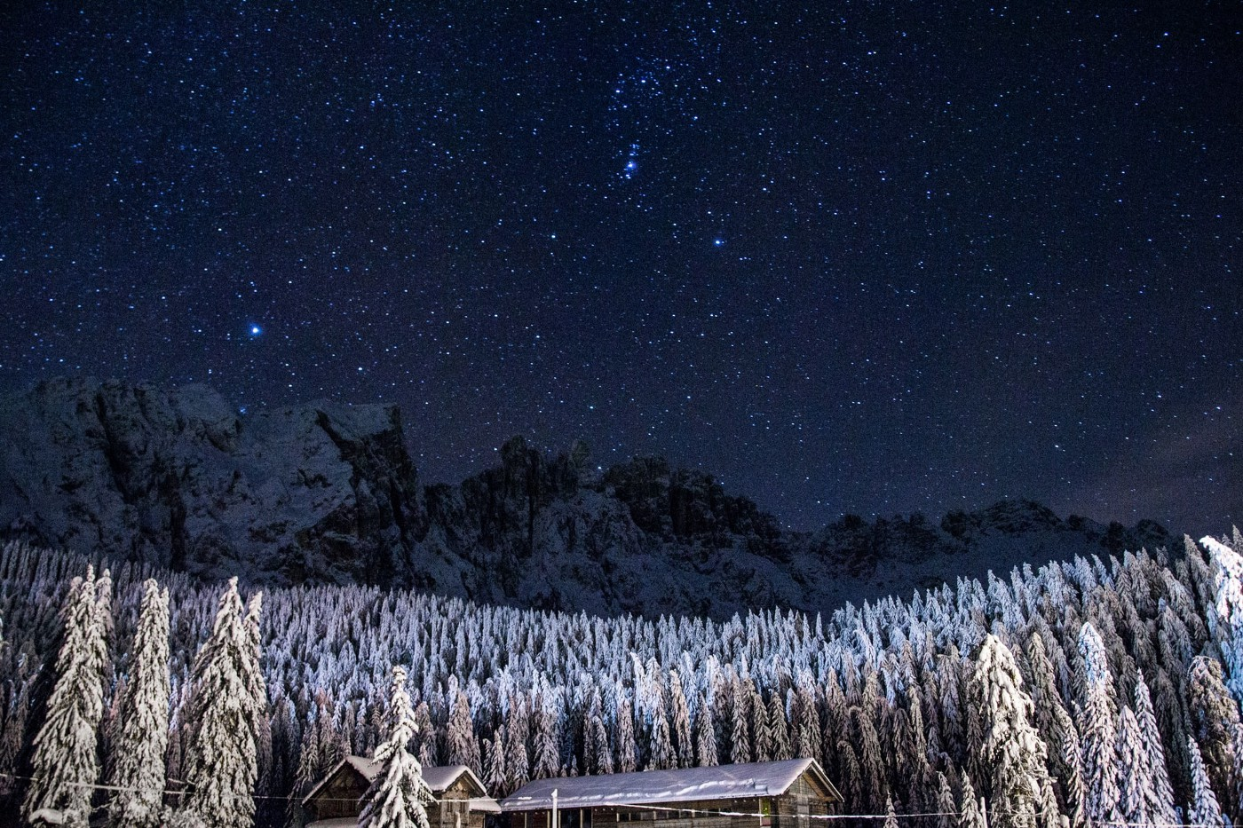 Night sky over a snowy forest