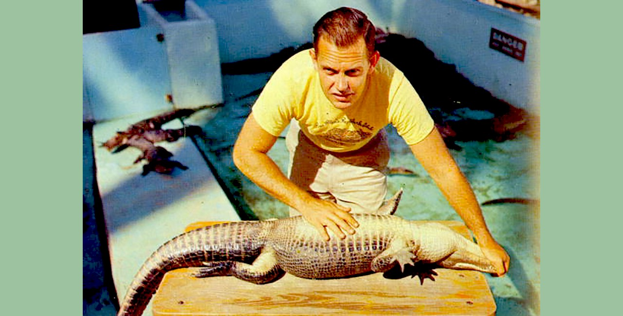 A man holds a small alligator on its back on a wooden table, with one hand holding its mouth shut and the other resting on its stomach