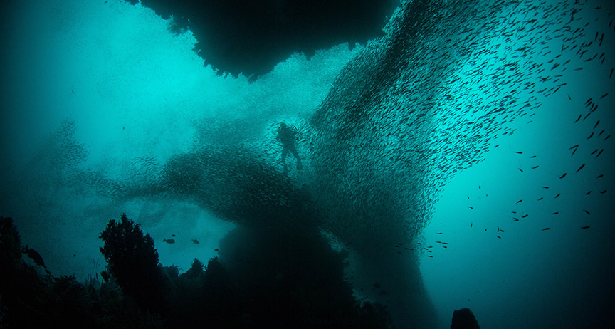 Person swimming underwater surrounded by a school of fish
