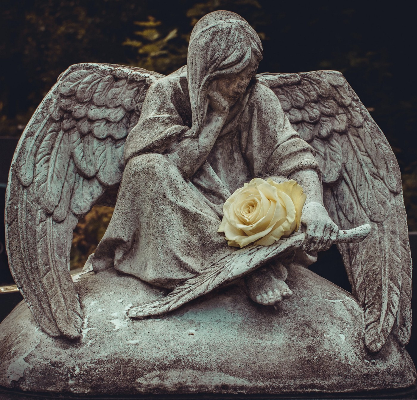 A statue of a seated angel in a cemetery holds a single white rose.