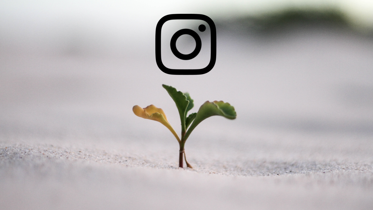 Plant growing. Instagram icon hovering over it
