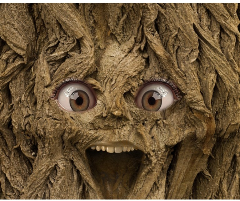 a face with a wide open mouth in a tree trunk