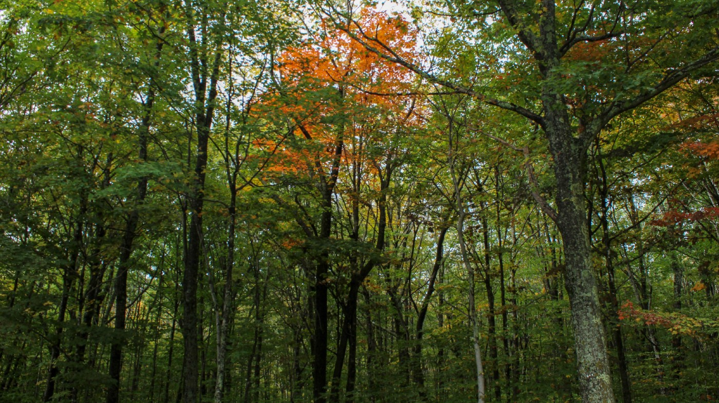 One small tree changing color in a forest