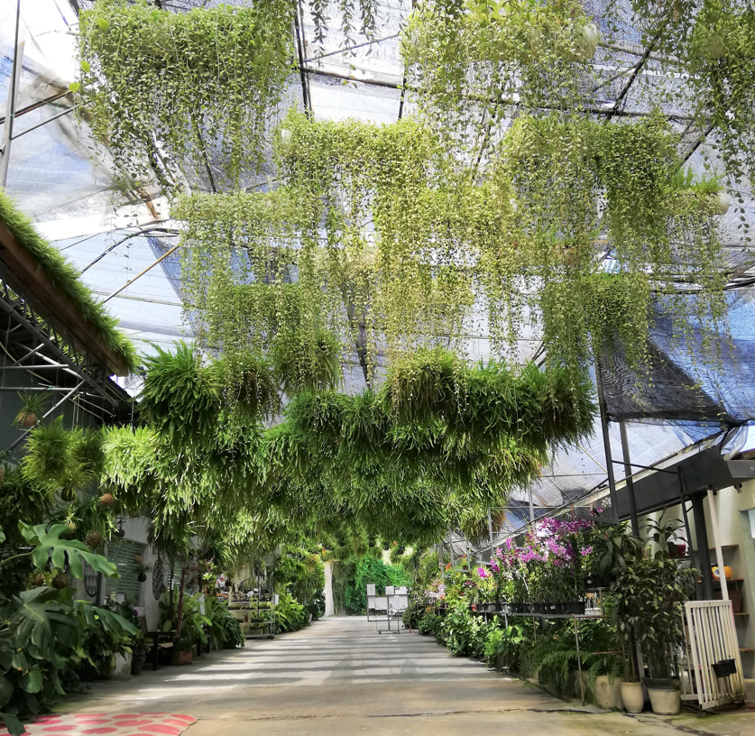 Photo by Ching Ching—Entrance to largest orchid farm in Malaysia